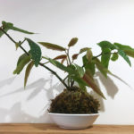 Les créateurs de la boutique : plante kokédama de L'adresse florale